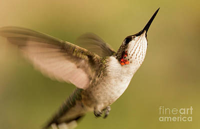 Photograph - Up Up And Away by Pam  Holdsworth