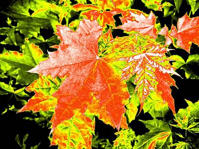 Digital Art - Upbeat Maple Leaves  by Will Borden