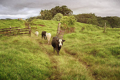 Art Print featuring the photograph Upcountry Ranch by Susan Rissi Tregoning