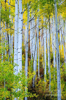 Photograph - Uphill Forest by The Forests Edge Photography - Diane Sandoval