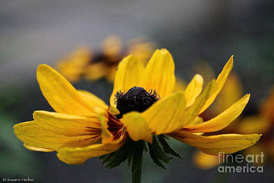 Photograph - Uplifting Gold by Susan Herber