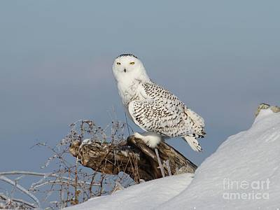 Photograph - Upon Her Lookout by Heather King