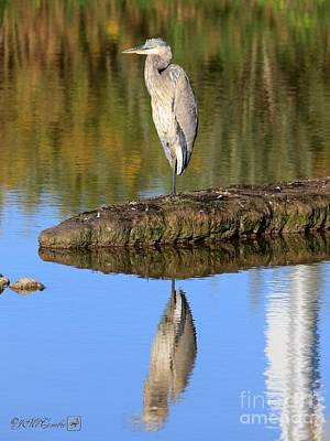 Photograph - Upon Reflection by J McCombie