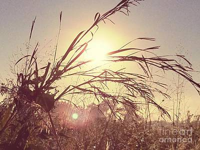 Photograph - Upon The Rising Sun by Maria Urso