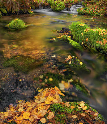 Photograph - Upper Cub River Autumn by Leland D Howard