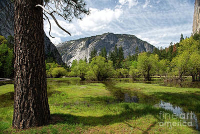 Photograph - Upper Meadow Mirror Lake by David Arment