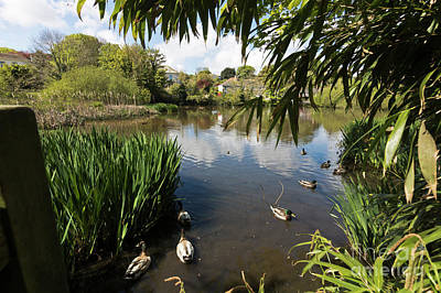 Photograph - Upper Mill Pond Hayle by Terri Waters