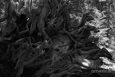 Web Photograph - Uprooted by Leah McPhail