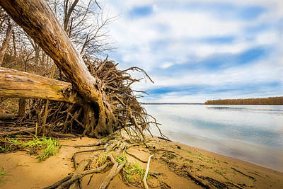 Muskie Photograph - Uprooted On The Mississippi by Todd Reese