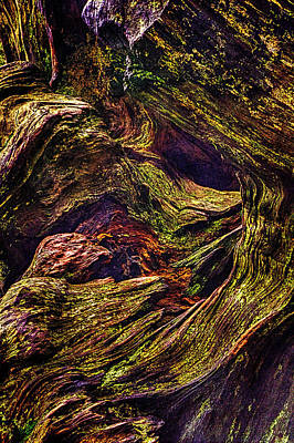 Photograph - Uprooted Sequoia by Roger Passman