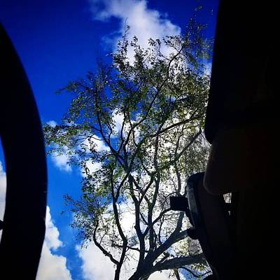 Photograph - Upscale by Simenona Martinez