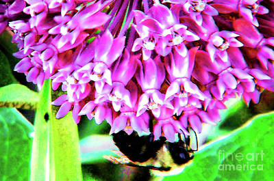 Photograph - Upside Down Bee by Shirley Moravec