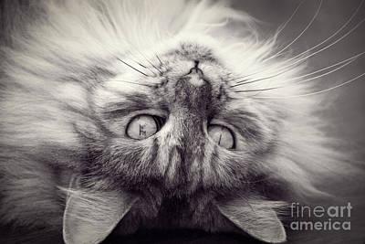 Upside Down Cat Art Print by Elaine Hillson