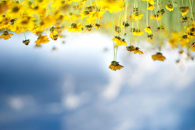Of Flowers Photograph - Upside Down by Shane Holsclaw