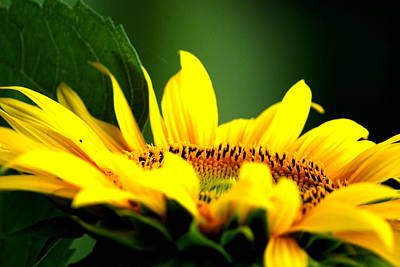 Flower Photograph - Upwards by Emily Stauring