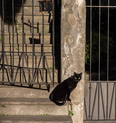 Photograph - Urban Cat by Mark Dahmke