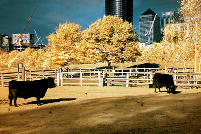 Photograph - Urban Cows by Helga Novelli