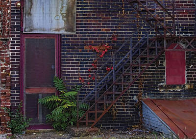 Photograph - Urban Decay - Persistent Vegitation by Ron Grafe