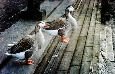 Goose Digital Art - Urban Geese by Margaret Hormann Bfa