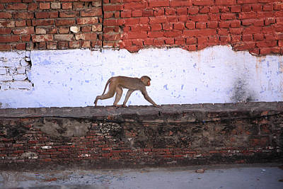 Photograph - Urban Monkey by Aidan Moran