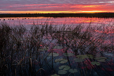 Photograph - Purple Sunrise With Lilypads #2 by Patti Deters