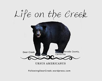 Digital Art -  Ursus Americanus - Color Bear Black Text by Lisa Redfern