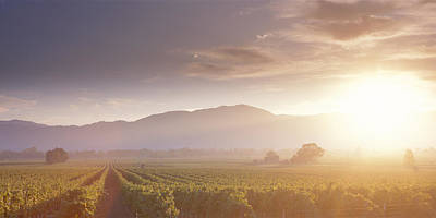 Grapevine Photograph - Usa, California, Napa Valley, Vineyard by Panoramic Images