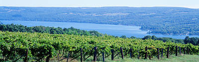 Grapevines Photograph - Usa, New York, Finger Lakes, Vineyard by Panoramic Images