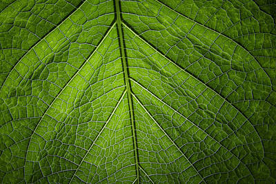 Usbg Leaf One Art Print by Kevin Blackburn