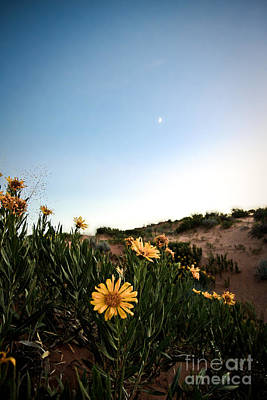 Utah Coral Sand Dune Flowers Print by Ryan Kelly