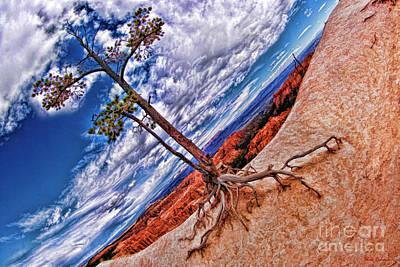 Photograph - Utah Juniper In Bryce by Blake Richards