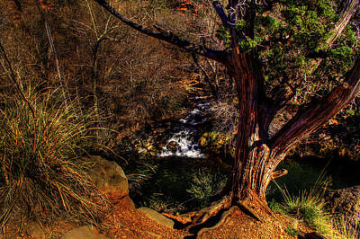 Photograph - Utah Juniper On Oak Creek Outside Sedona Az by Roger Passman