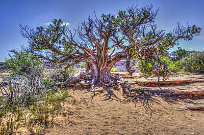 Photograph - Utah Juniper On The Climb To Delicate Arch Arches National Park by Roger Passman