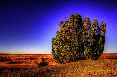 Photograph - Utah Juniper On The Rim At Kachina Point by Roger Passman