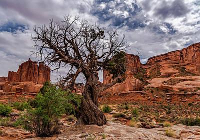 Photograph - Utah Juniper Tree by Willard Sharp