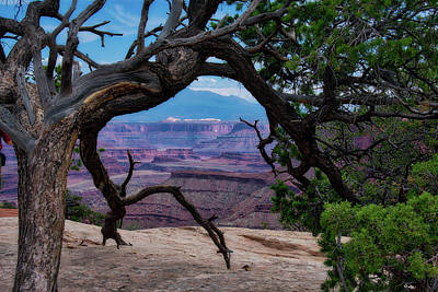 Photograph - Utah Trees Canyonlands National Park 01 by Thomas Woolworth