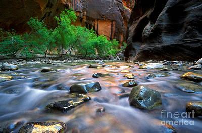 Photograph - Utah - Virgin River 5 by Terry Elniski