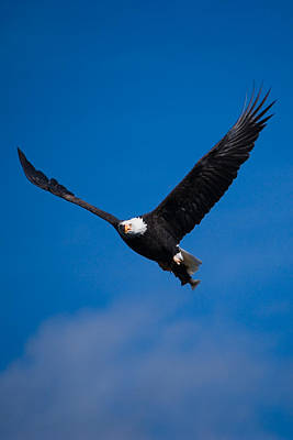 Eagle Photograph - V For Victory by Randall Ingalls