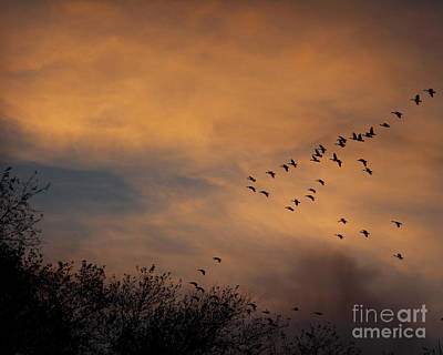Photograph - V Formation At Sunset  by Kathy M Krause