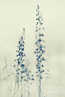 Larkspur Photograph - Wild Flowers by Priska Wettstein