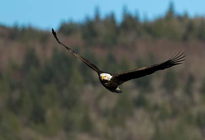 Photograph - 'v' Wings by Shari Sommerfeld