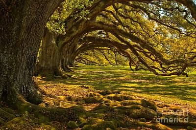 Photograph - Vacherie Magnificent Oaks by Adam Jewell