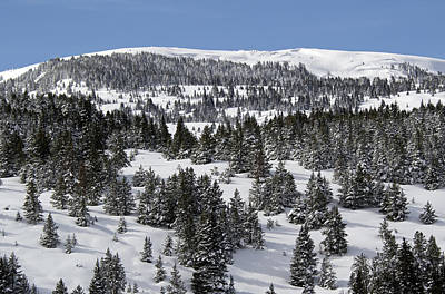 Vail Pass Colorado Winter Art Print by Brendan Reals