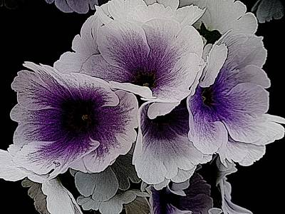 Photograph - Vainglorious Violet by Dorothy Berry-Lound