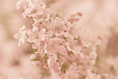 Photograph - Valarian Blossoms Macro by Sandra Foster