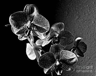 Photograph - Valentine Bloom Bw by Chalet Roome-Rigdon
