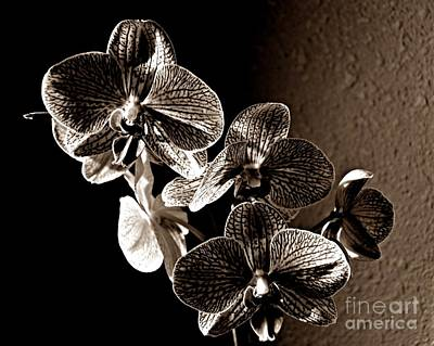 Photograph - Valentine Bloom Sepia by Chalet Roome-Rigdon