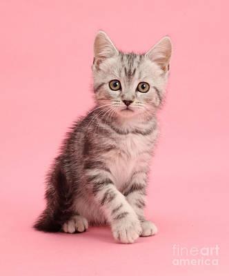 Photograph - Valentine Kitten Love by Warren Photographic