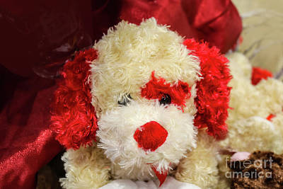 Photograph - Valentine Puppy by Susan Vineyard