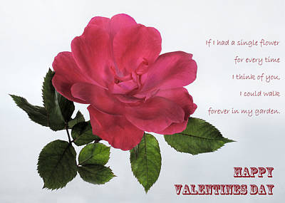Photograph - Valentine Rose by David and Carol Kelly